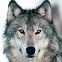 vanderwolf
