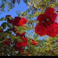 deena_a15