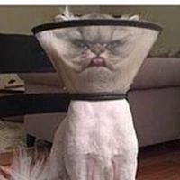 _hello_kitty_123