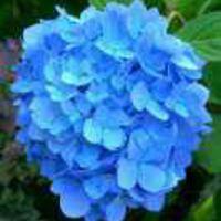 Avatar of blueflower24
